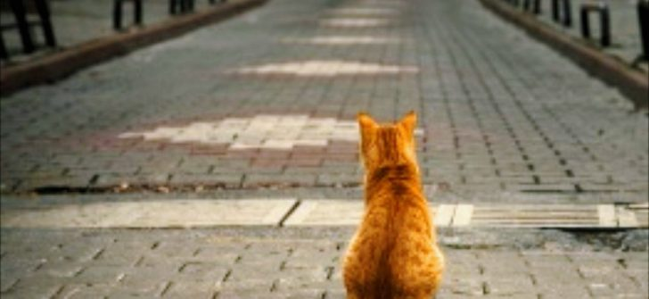 Beklemek / Kübra Sena Yıldız